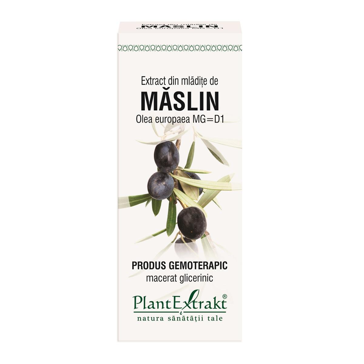 Extract din mladite de Maslin, 50ml, Plantextrakt imagine produs 2021