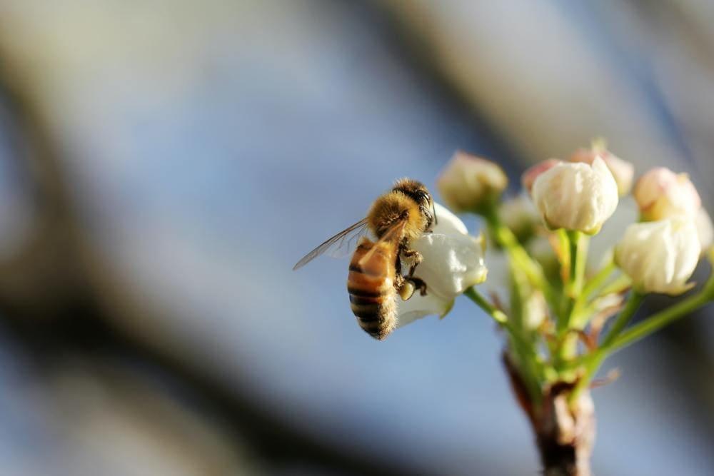 tratamentul albinelor de mușcătură varicoză)